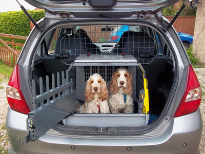 Safely Transporting Your Canine Pet